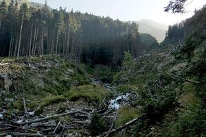 Взгляд на долину Домбай